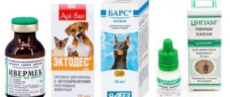 препараты от ушного клеща