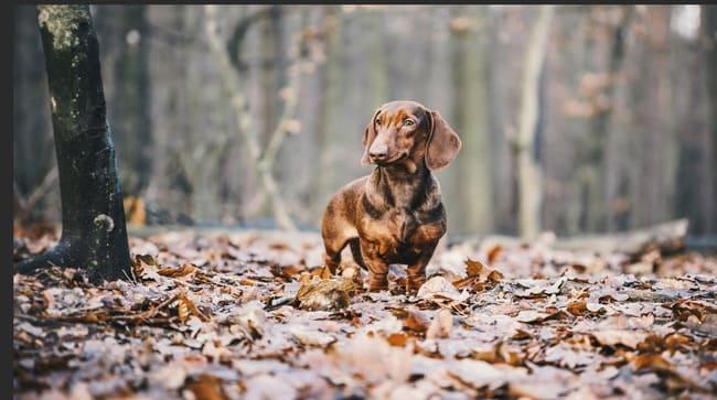 Грибок у собаки: виды микозов и список препаратов для лечения грибковых заболеваний у собак