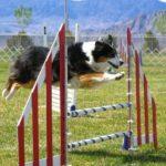 аджилити для собак
