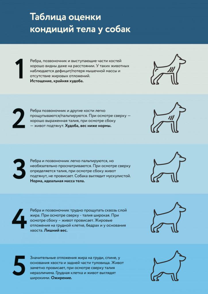 Таблица оценки кондиций тела у собак