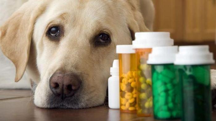 Собаке не хватает витаминов