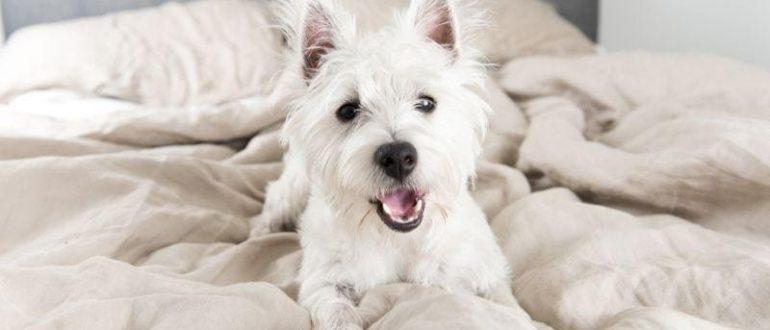 Собака на постели