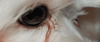 слезится один глаз у собаки