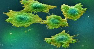 Микоплазмы под микроскопом.