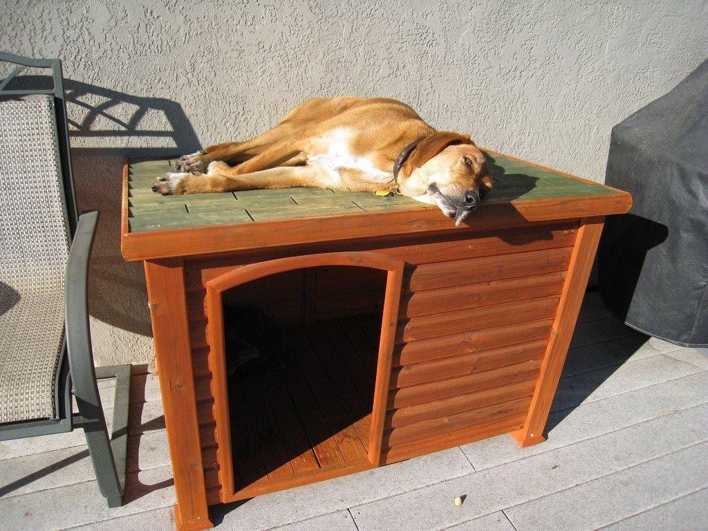 Собака лежит на крыше будки