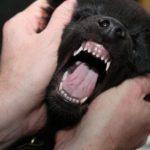 зубы у собаки