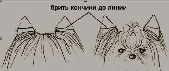 убрать шерсть на ушах по линии
