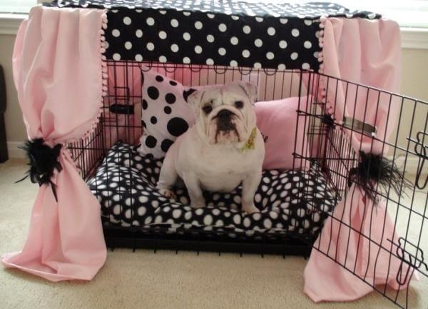 Собака в обустроенной клетке - хороший способ оставить ее одну