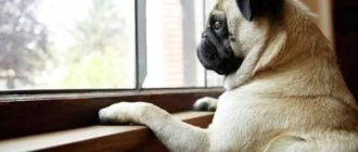 собака осталась одна дома