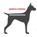 измеряем длину спицы собаки