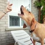 Собака лает по команде
