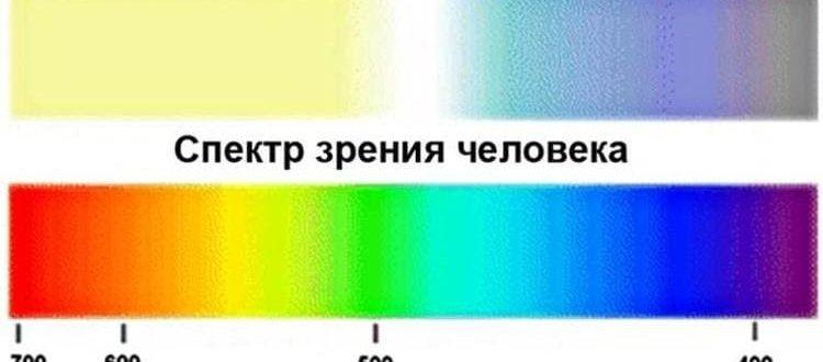 Спектр зрения собаки и человека