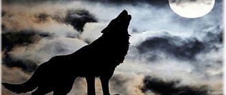 собака воет на луну