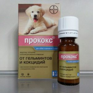 Прококс суспензия для собак