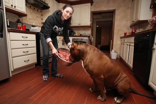 крупный пес ест очень много