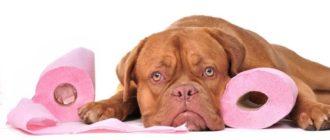 Почему собака писает на кровать