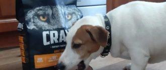 собака ест корм Crave