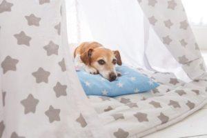 Пес лежит в своем комфортном лежаке