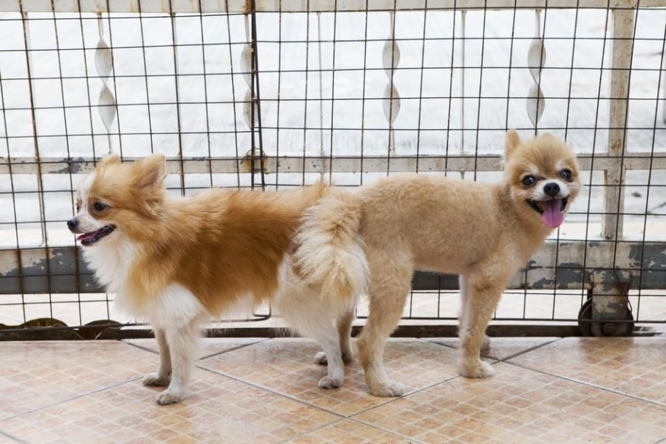 собаки слиплись попами