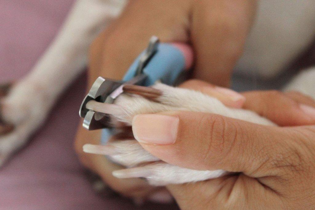 Процесс стрижки когтей
