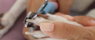 Как подстричь собаке когти