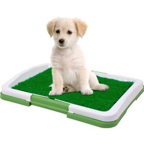 Газонная трава в лотке для собаки