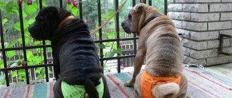 течка у стерилизованных собак