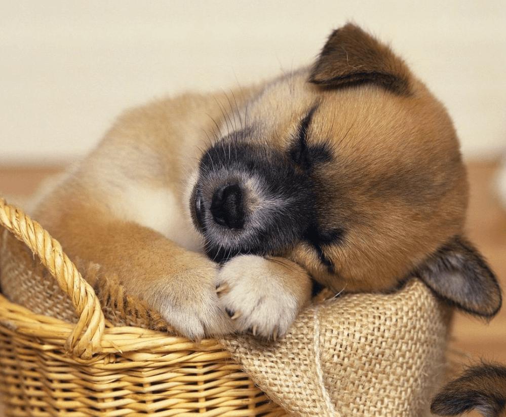 У спящего щенка мордочка может быть сухой.