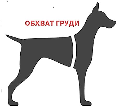 обхват груди собаки
