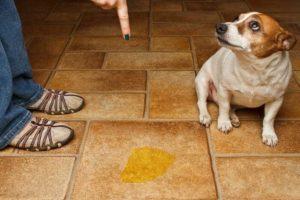 собаку нельзя наказывать