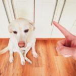 как наказать непослушную собаку