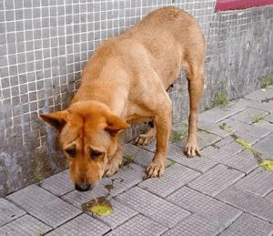 У собаки непроходимость кишечника