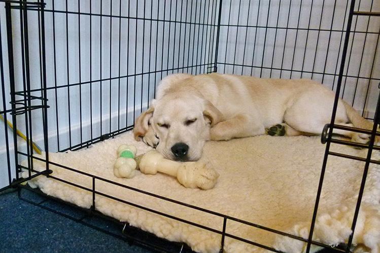 Собака в своей клетке с косточной