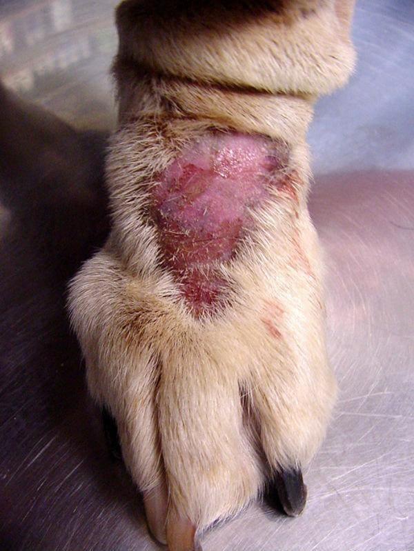Как проявляется аллергия на корм у собак? Разбор признаков