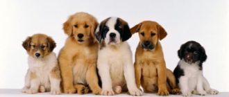 сколько живут собаки в среднем