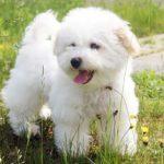 фотографии маленьких пород собак