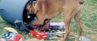 собака ест на улице