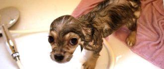 первое купание щенка