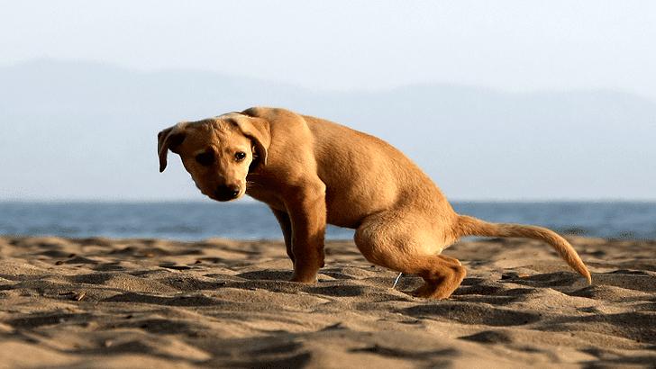 собака часто и много мочится
