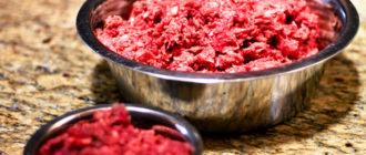 сырое мясо собаке