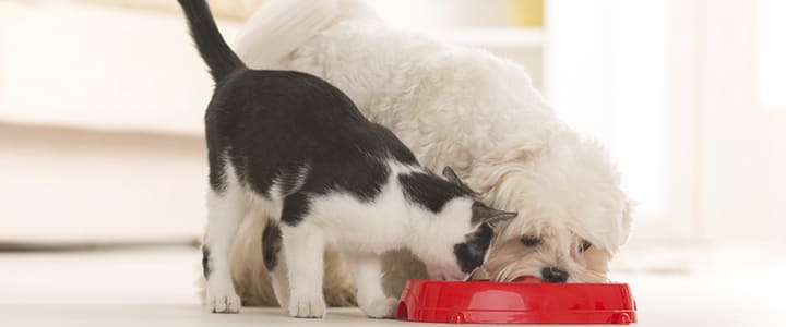 Щенок ест кошачий корм: можно или нельзя?