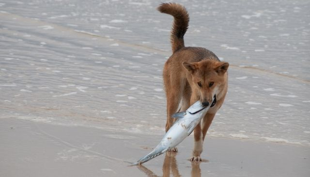 собака с рыбой
