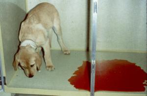собака и кровь
