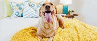 порода собак для квартиры с детьми