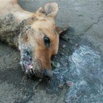 судороги и пена изо рта у собаки