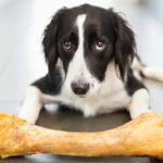 Собака и кость