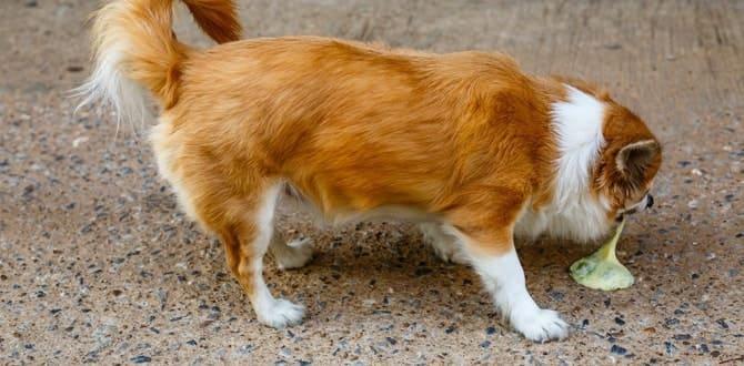 Собаку рвет белой пеной