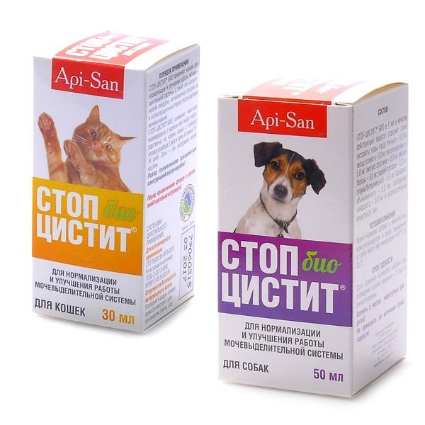 Цистит у собак: 9 причин болезни, симптомы и лечение