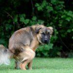 у собаки зеленый кал