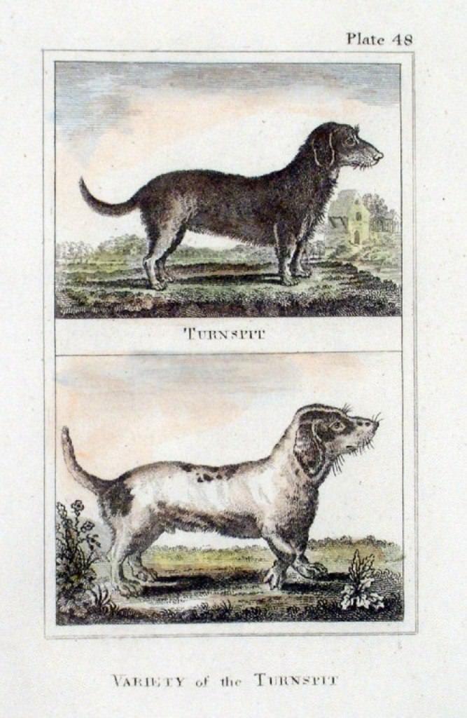 Вертельная собака